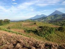 Кукурузное поле Гватемалы стоковое изображение
