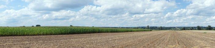 Кукурузное поле и вспаханная земля Стоковые Изображения RF
