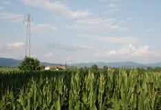 Кукурузное поле и опора Стоковая Фотография RF