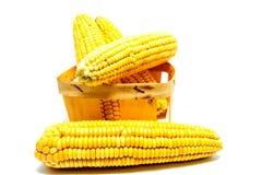 Кукурузные початки в корзине изолированной на белизне Стоковые Изображения RF