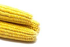 Кукурузные початки изолированные на белизне Стоковые Изображения