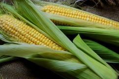 Кукурузные початки на дерюге Стоковая Фотография