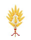 Кукурузные початки связанные с лентой Стоковые Изображения RF