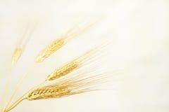 Кукурузные початки Стоковое Изображение