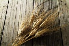 Кукурузные початки Стоковые Изображения RF