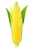 Кукурузный початок/вертикальное/изолировать Стоковая Фотография