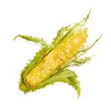 Кукурузный початок изолированный на белизне Стоковое Изображение