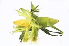 Кукурузный початок изолированный на белизне Стоковое Фото
