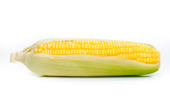 Кукурузный початок изолированный на белой предпосылке Стоковое Изображение