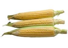 Кукурузный початок изолированный на белой предпосылке Стоковая Фотография RF
