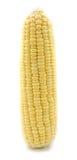Кукурузный початок  Стоковая Фотография