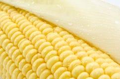 Кукурузный початок  Стоковое фото RF