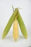 Кукурузный початок Стоковые Фотографии RF