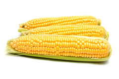 Кукурузный початок Стоковые Изображения RF