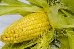 Кукурузный початок Стоковое Изображение RF