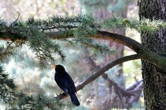 Кукушка сидя на ветви в дереве Стоковое Фото