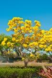Кукушка стоя в дереве Стоковое фото RF