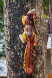 Кукла белки на дереве Стоковое Фото