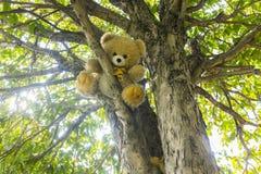 Кукла медведя на дереве Стоковые Фото