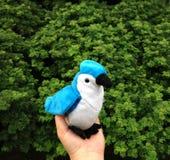 Кукла птицы Стоковое Изображение RF