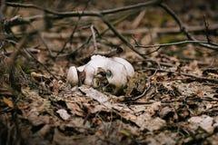 кукла страшная Стоковая Фотография