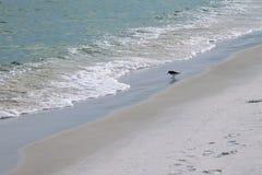 Кулик на пляже наблюдая для еды в волне воды Стоковая Фотография