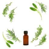 кулинарные травы целебные стоковые фотографии rf