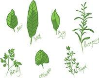 кулинарные травы Стоковые Фото