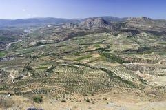культивируемая греческая земля Стоковое Изображение