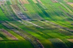 культивируемое поле засаживает рядки Стоковое Изображение