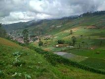 Культивируемый ландшафт поля фермы стоковое фото rf
