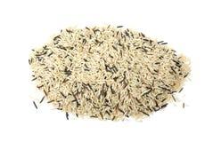 культивируемый рис кучи зерен смешанный одичалый Стоковая Фотография