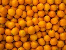 Кумкват (малый tangerine) Стоковое Изображение RF
