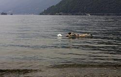 Купальщик ослабляет путем плавать с раздувным тюфяком на Стоковые Изображения