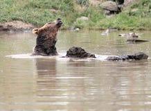 купать озеро медведя Стоковое Фото