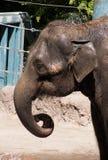 Купать слона Стоковая Фотография RF