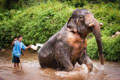 Купать elefant mahout, святилище Khao Sok, Таиланд Стоковые Изображения RF