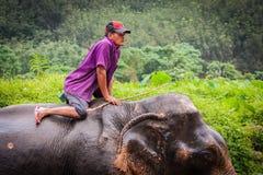 Купать elefant mahout, святилище Khao Sok, Таиланд Стоковая Фотография RF