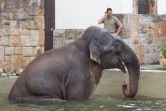 Купать maximus Elephas азиатского слона Стоковая Фотография RF