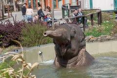 Купать maximus Elephas азиатского слона Стоковые Фотографии RF