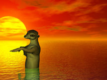 купать meercat Стоковые Изображения
