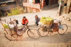 Купец плода saling их плод на велосипеде около дороги в прописной области, Катманду, Непала стоковые изображения rf