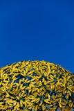 куполок золотистый Стоковое Изображение RF