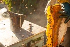 Курильщик пчелы куря в пчеловодстве пчел меда copyspace пасеки сезонном обрабатывая землю органическая продукция производящ конце Стоковое фото RF
