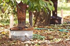 Курильщица сбора винограда под фруктовыми дерев дерев стоковое фото