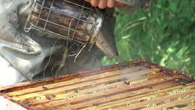 Курить вне пчел сток-видео