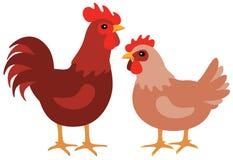 Курица и петух Стоковые Фотографии RF