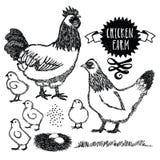 Курица Сассекс птицефермы иллюстрация штока