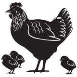 Курица с цыпленоками Стоковое Изображение