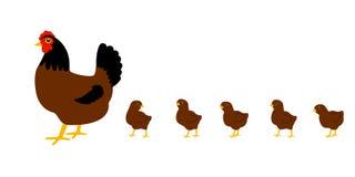 курица цыплят Белая предпосылка изолировано вектор бесплатная иллюстрация